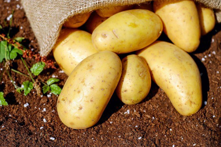 Is it Good to Eat Potato?
